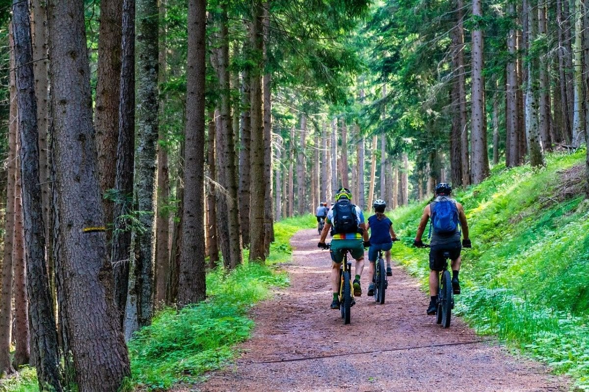 forest, forest road, mountain bike