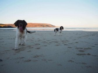 dogs at the beach